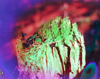 Glow to Growth Psychedelic 35mm film Analog Colorful Dreamy Nature Photo Print