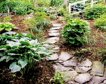 garden wall art wallstone pathgardenphoto of summer garden stone path