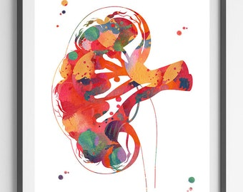Kidney section watercolor print human anatomy urology kidney section poster medical art wall decor anatomy art gift kidney print [03]