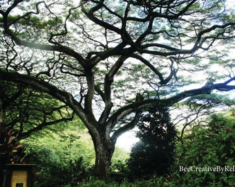 INSTANT DOWNLOAD Photograph of Hawaii Tree North Shore Nature Hawaii Photography Home Office Decor