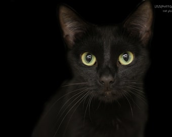 Black Cat Portrait - Black Cat Lover - Halloween Art - Pet Photography - Black Kitten Picture