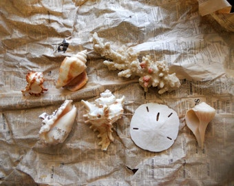 Assortment of Seashells