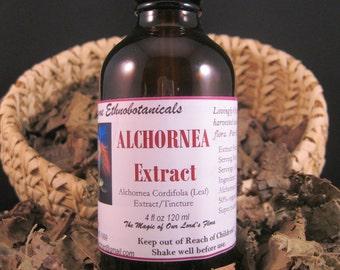 ALCHORNEA CORDIFOLIA Extract / Tincture  Buhner  4 ounce dropper bottle