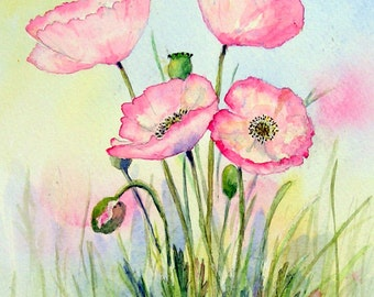 Pink Shirley Poppies, A4 print from my original watercolour painting.