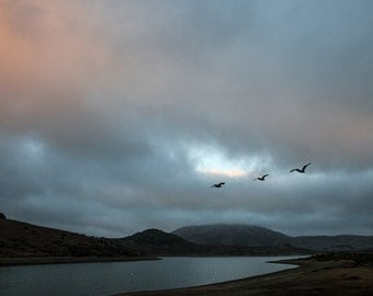 three Canada Geese flying low over Nicasio Reservoir, near Nicasio