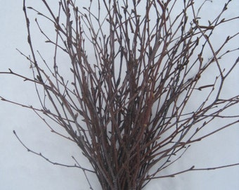 Birch Branches 16 inches Bunch of 25, Birch Twigs