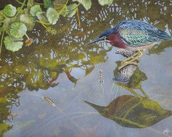 Green Heron II Fishing - Giclee PRINT of Watercolor painting