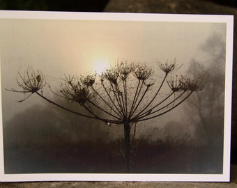 Misty Morning Hogweed (Greeting Card)