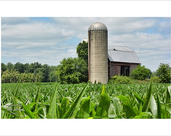 Silos and Red Barn, Corn Crop, Corn Field, Michigan Farming, Agriculture, Wall Decor