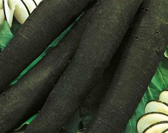 Radish Seeds Winter Cylinder Ukraine Heirloom Vegetable Seeds #131
