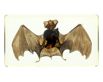 Large Bat Specimen