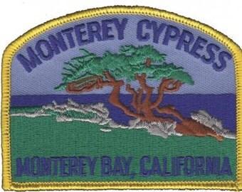 Monterey Cypress, Monterey California Patch