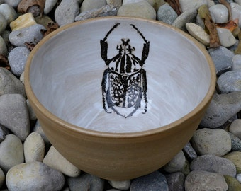 Tan and White Goliath Beetle Bowl