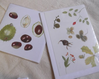 Botanicals in Coloured Pencils by Joan Longley