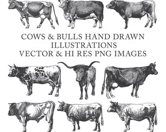 Cow Clipart, Bull Clipart, Farm Clipart, Hand Drawn Engraving Cow Bull Buffalo Clipart Clip Art PNG EPS AI Design Elements Digital Download