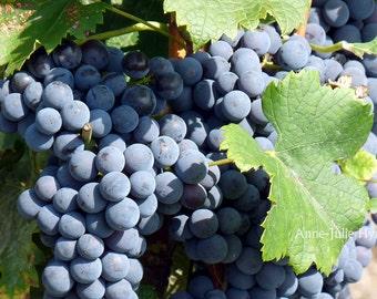 "Fine Art Photography, fruits,raisins, vine,Nature,8X12"" or 16x24"", Bergerac's Grapes"