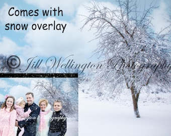 Digital snow background, winter, snowy, comes with snow overlay for photographers
