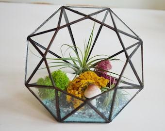 Air Plant Diamond Terrarium