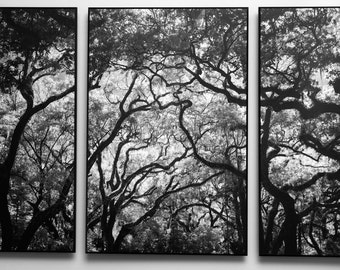 Tri Panel Black and White Tree Photography Mounted on Wood Float Plaques For A Triptych Wall Art
