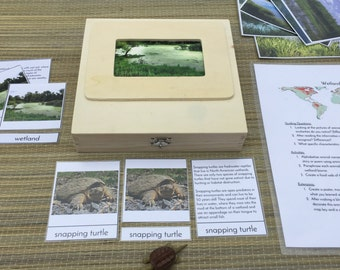 Montessori Biome Box Wetland - Objects and Three/Four Part Cards