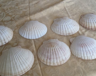 Sea Shells for serving sea food appetizers. Could also be used for decor.