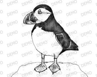 Puffin sketch A4 Print & A4 frame B003