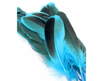 4-6 Inch Black and Blue Duck Feathers. (10) Smooth Blue Feathers for Crafts. Earring Accessories. Blue Duck Wing Feathers. Blue Bird Feather