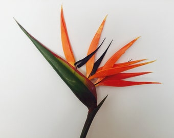 "Bird of Paradise Flower, Artificial, Faux, Tropical Flower - 36"" Tall"