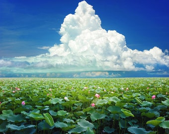 Lotus Backdrop - lotus lake, white cloud, buddhist - Printed Fabric Photography Background P0135