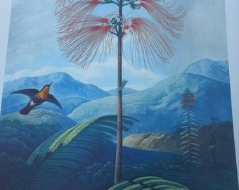 4 Botanical prints from Mass horticultural library