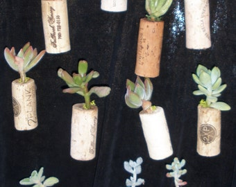 Set of 5 - Succulent Cork Magnets, wedding favors, birthday favors, corporate gifts, office gifts, unique gifts, unusual agents
