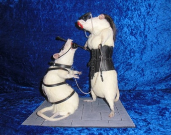 M@S taxidermy very large rats. Free shipping adult theme and humor taxidermy