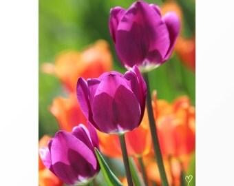 Purple Wall Art, Flowers, Purple Print, Purple Art Print, Three Purple Tulips!