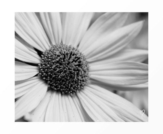Black and White Prints, Black and White Art, Flower Art, Modern Art, Flower Print, Flower Photography, Fine Art Print