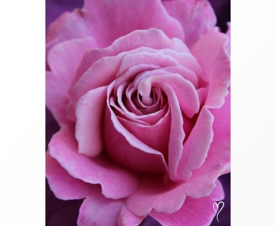 """Pink Rose Print, Rose Art, Signed Original Fine Art Print, Home Decor, Flower Art, Soft Pink Wall Decor, """"Ruffled Beauty"""" Rose Photograph"""