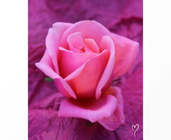 """Pink Wall Decor of a Pink Rose, Pink Modern Decor, Rose Wall Art, Pink Home Decor, Rose Art, Pink Print, Flower Print """"Little Pink Beauty"""""""