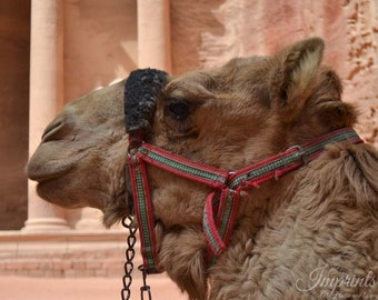 travel photography, Petra, camel, home decor, wall print, photography, Middle East photography, Jordan