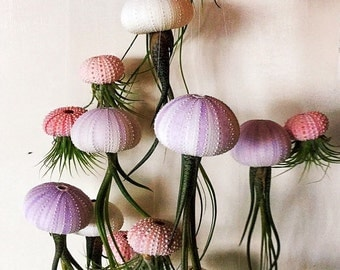 THREE Hanging Jellyfish Air Plants - Purple/White Long Butzii Airplants, Gift for Her, Airplants for Sale
