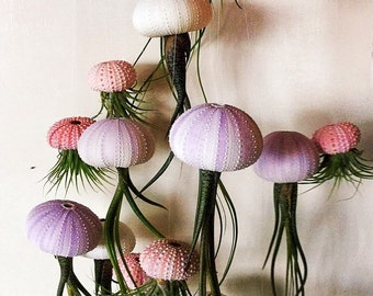 Air Plant, Air Plants, Jellyfish Airplant, SIX Assorted Hanging Jellyfish Airplants