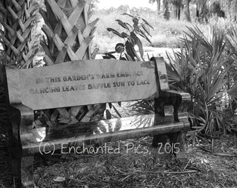 Garden Bench- nature photography, trees, garden, bench, palm tree, outdoor, plants