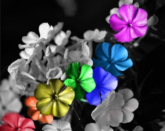 Flowers for ROY.G. BIV Photograph