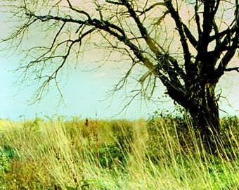 tree in tall grass