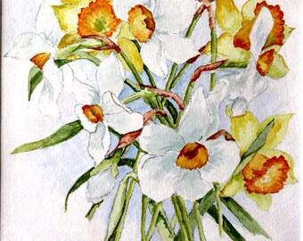 Daffodils & Jonquils