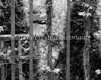 Vine Covered Fence Photograph, nature, vines, fence, Photography, Printed on Luster Paper