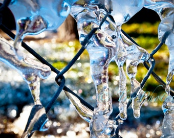 Icy Fence Print
