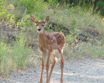 Is that Bambi?