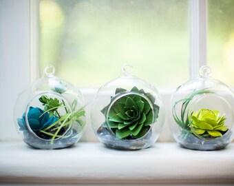 The Succulent Terrarium Trio