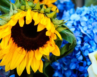 SUNFLOWER: A Pop of Color