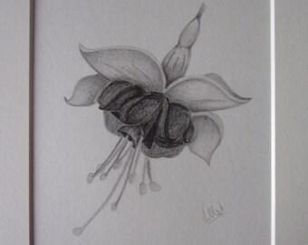 Fuchsia Pencil Drawing, Flower Drawing, Pencil Sketch, 10x8 Drawing, Flower Pictures, Fuchsia Pictures