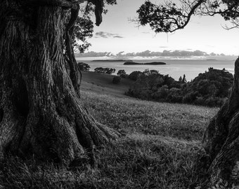Black and white, landscape, trees, shadow, sea, peace, morning, limited edition, giclee, print, nature photography